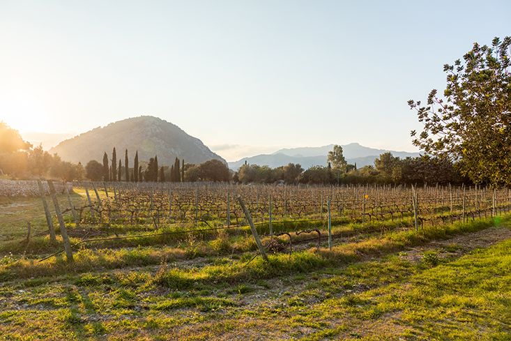 winery-pollensa-porsche